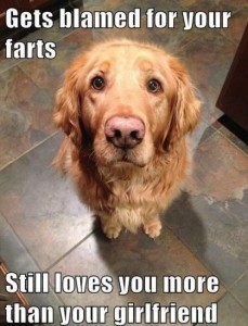 Funny-Quotes-about-Dogs-9-419x550